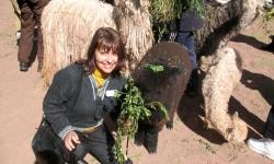 feeding-a-young-alpaca